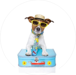Hundesurlaub-rund